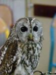 ma petite célia en vrai - Male Owl (10 months)