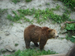 ours - Bear