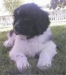 Bepper - Wolf (11 months)
