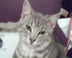 Aro - Male Cat (1 year)
