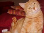 filou - Cat