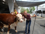 Me and Rocky Road - Male Cow (1 year)