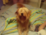 Ulysse - Male Dog (6 years)