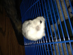 Love - Hamster (8 months)