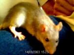 corey en colere - Mouse