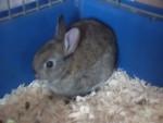 anna - Rabbit (2 months)