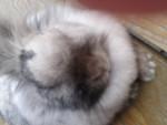 Pipine - Rabbit